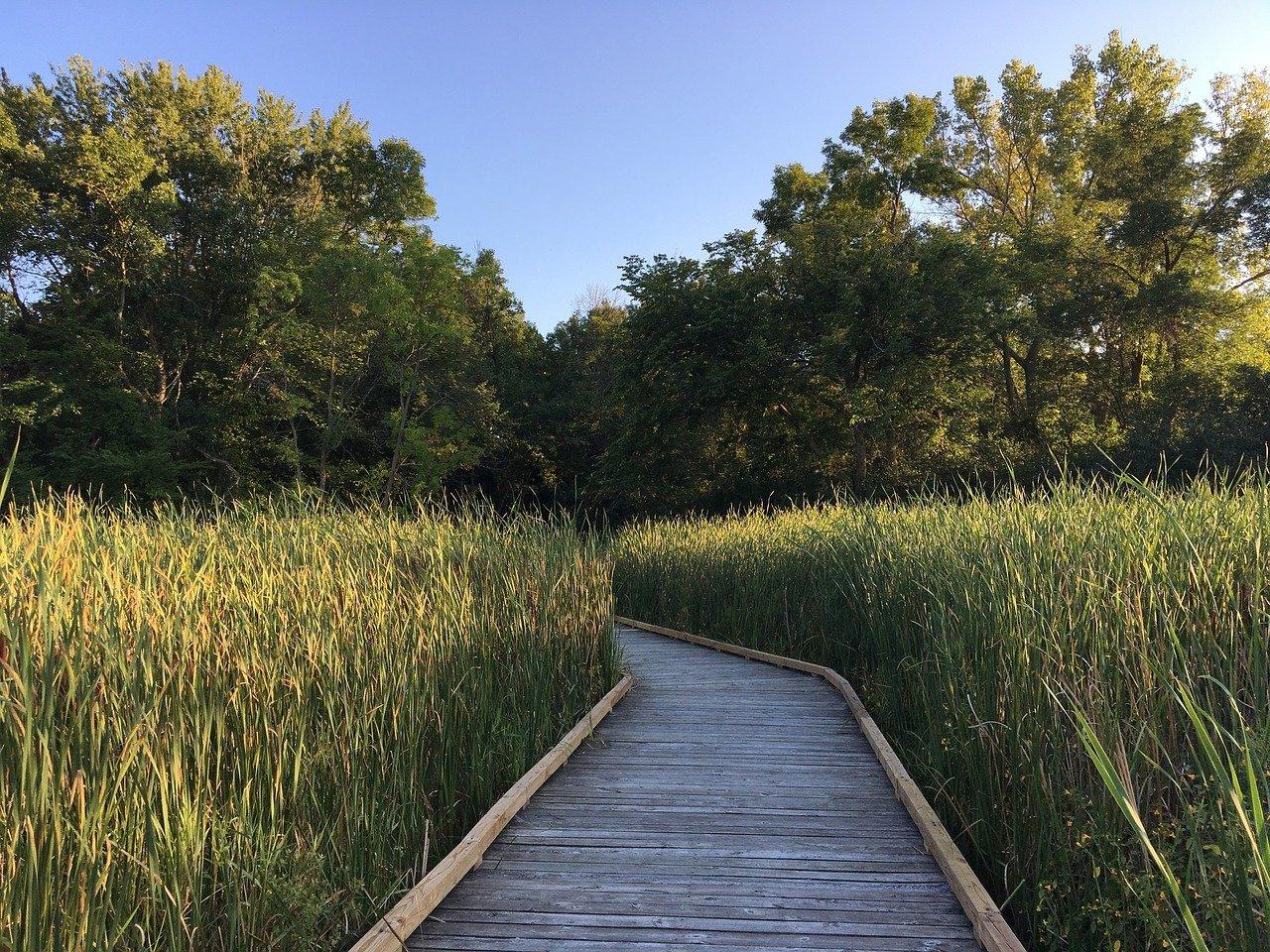 wetland-1806378_1280.jpg